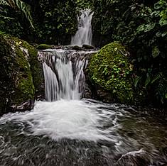 Rio Nambillo, forêt de nuage, Mindo