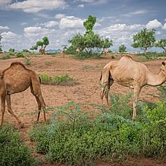 UNHCR Kakuma Refugee Camp