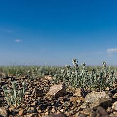 Ulaan Shiree, désert de Gobi