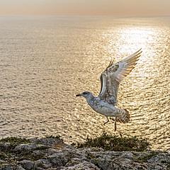 Cabo de São Vicente, Sagres