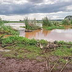 Marabous, Parc national de Nairobi