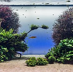 """Forêts sous-marines"" de Takashi Amano"