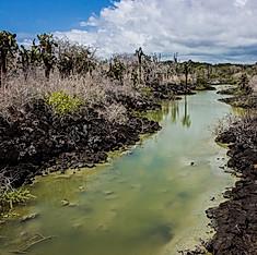 Las Grietas, Santa Cruz, Galapagos