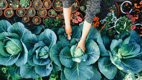 Organic VS Non Organic (En Español más abajo)