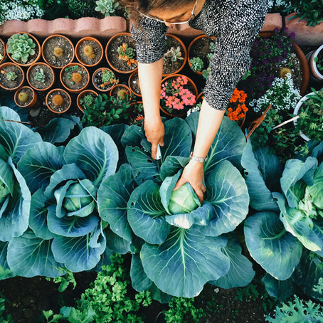 10 Drool Worthy Backyard Gardens