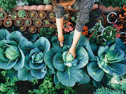 Huerto vegetal
