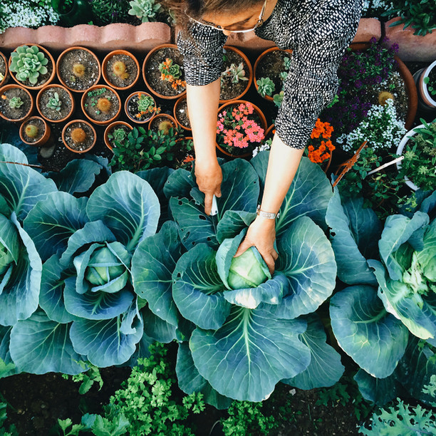 10 jardins potagers qui font rêver