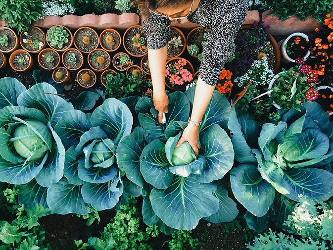 Gemüsegarten
