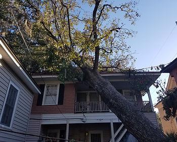 duncans tree removal 3.JPG