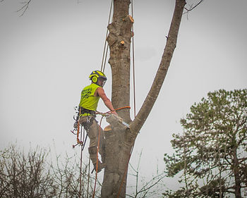 Duncan's Tree 2020 3.JPG
