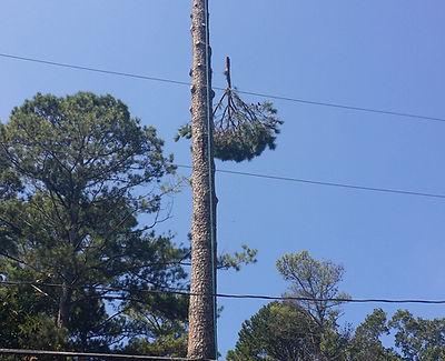 duncans tree trimming 1.JPG