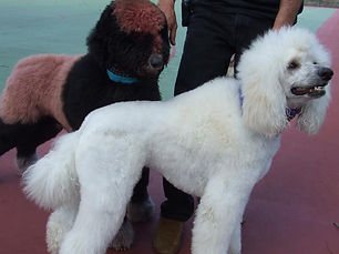 PassionPC dogs 1.JPG