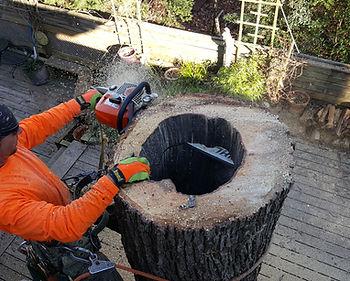 duncans tree trimming 2.JPG