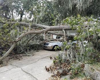 duncans tree removal 2.JPG