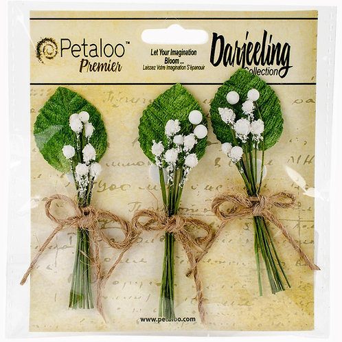 Petaloo Flowers, Baby's Breath, Darjeeling Collection
