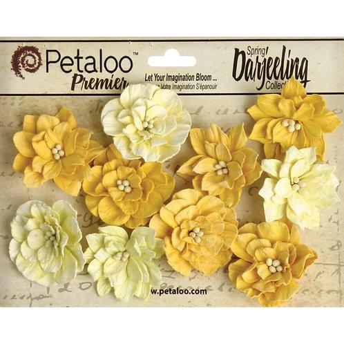 Petaloo Flowers, Tea-Stained Dahlia, Darjeeling Collection