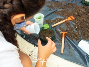 Aprendendo a cuidar e cultivar