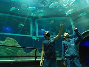 Aula no aquário!