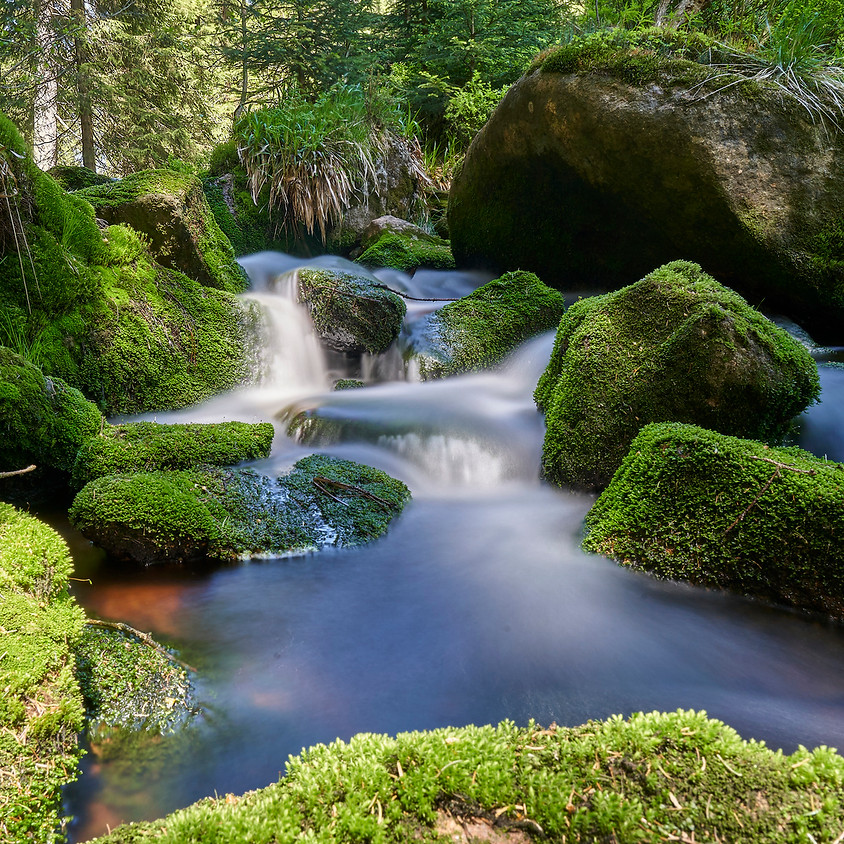 #stayhome_ Live Meditation_Ängste loslassen_Waldspaziergang_(Zoom)