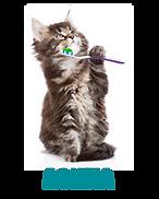 Περιποίηση Δόντια Γάτας