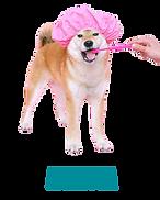 Δοντια Σκυλου