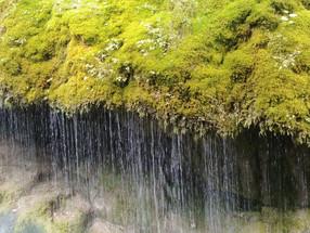 Il paradiso è un #giardino selvatico, osservando  la complessità della #natura