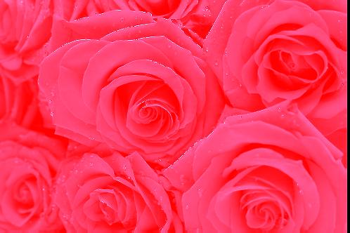 Sac de Pétale de roses