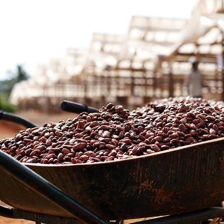 Cinq engagements pour un cacao durable