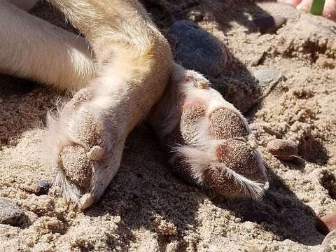 Molly beach paws.jpg