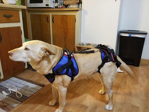Molly harness.jpg