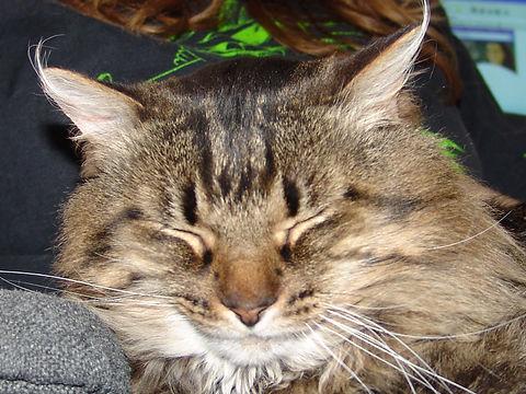 Spike Sleep.jpg