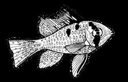 Mikrogeophagus ramirezi