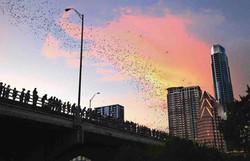 Bat-Bridge-Credit-Austin-CVB_2b992214-c8ad-be69-2493da0e84bc3a29