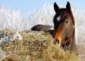 Horse-Hay-Winter-300x214.jpg