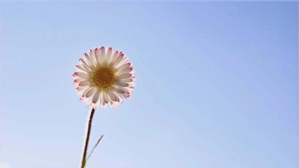 What_is_mindfulness++Mindfulness360.jpg
