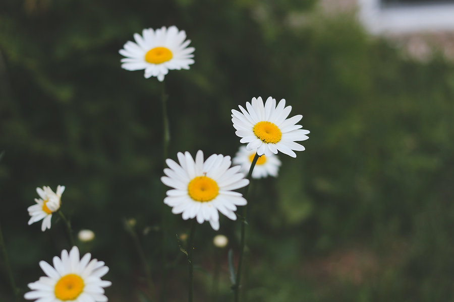 mindfulness 360-posts.jpg