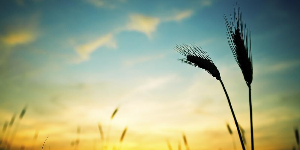 γενναιοδωρία , generosity
