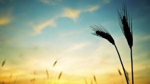 4. Γενναιοδωρία - Τέσσερις Δεξιότητες Για Ευημερία Που Επιβεβαιώνει Η Νευροεπιστήμη