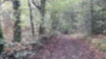 forêt de Boubon