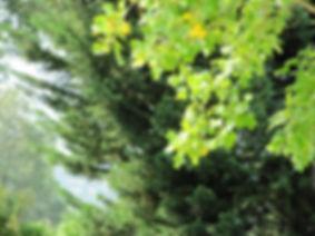 nature_bonheur.jpg