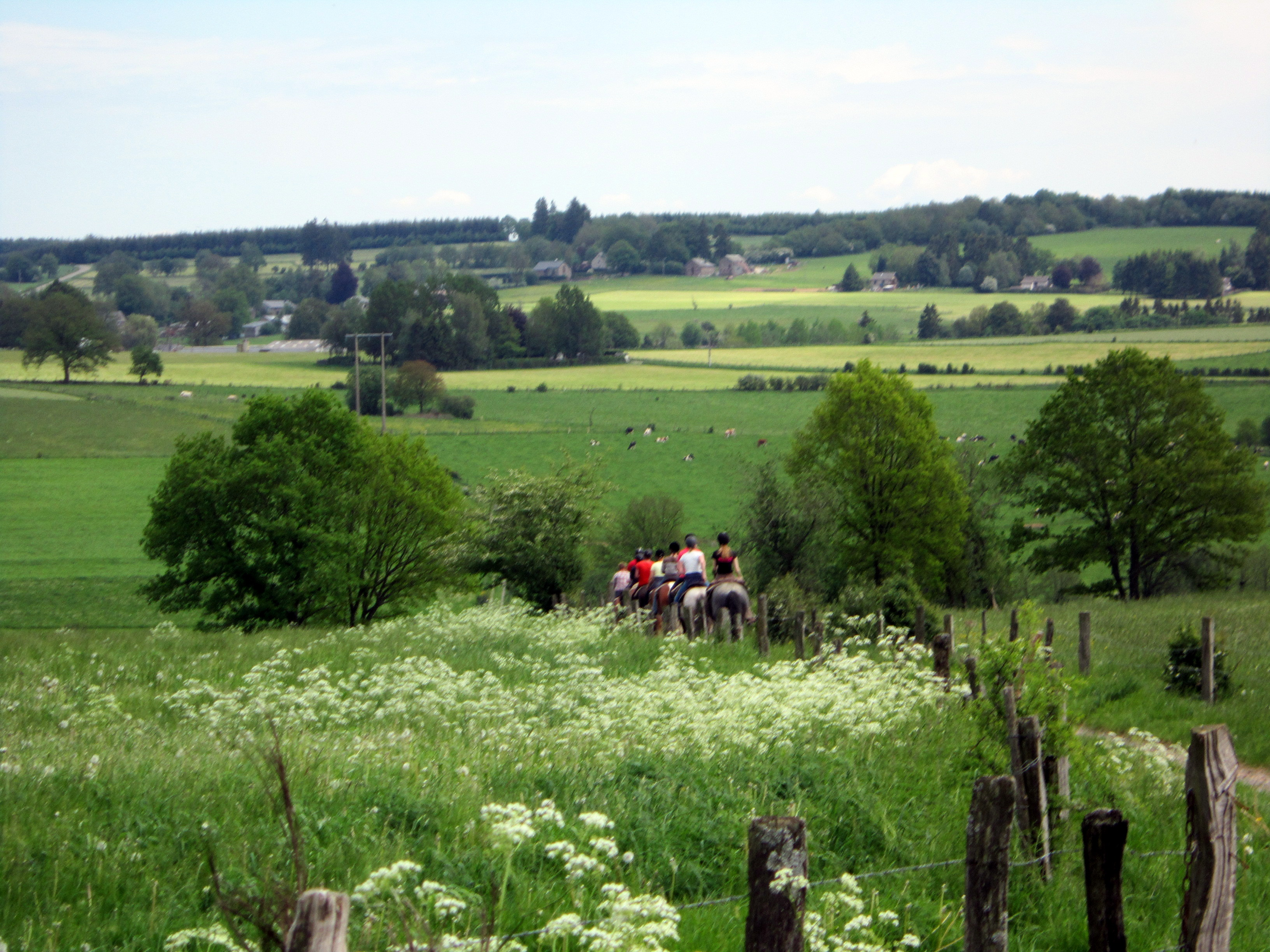Ardennen omgeving van het vakantieve