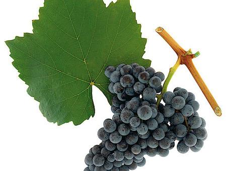 Know Your Grapes: Blaufränkisch