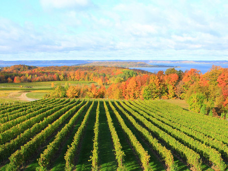 Wineries of Mission Peninsula (WOMP) Lawsuit: Interview with WOMP's attorney Joseph Infante