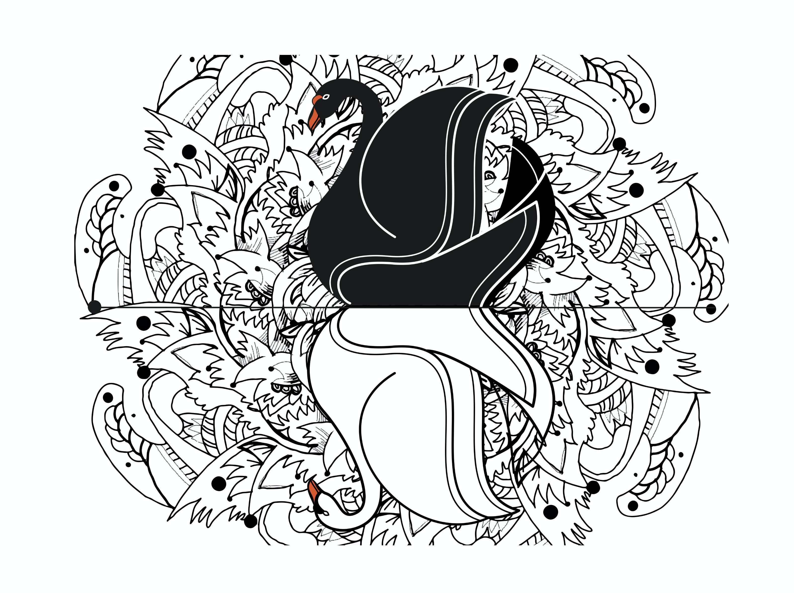 Cygne-fond-blanc