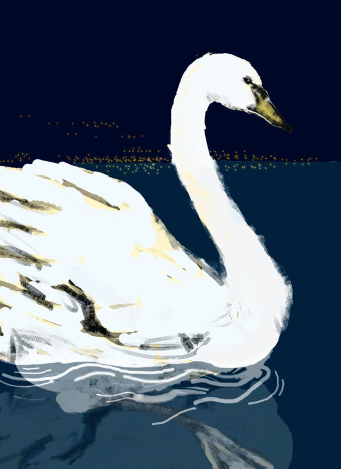 Cygne du lac Léman