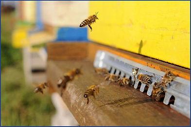Bees-Protection.jpeg