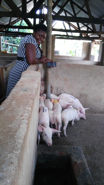 Piggery Farm 1