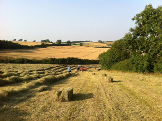 Hay Gathered In