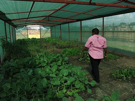 Garden large_Ayn Brown-369.jpg