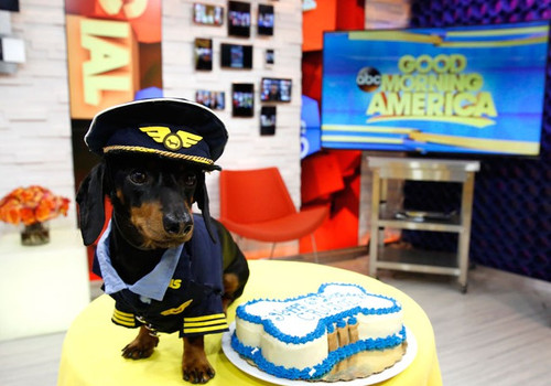 Crusoe The Celebrity Dachshund And His Dog Bone Shape Birthday Cake